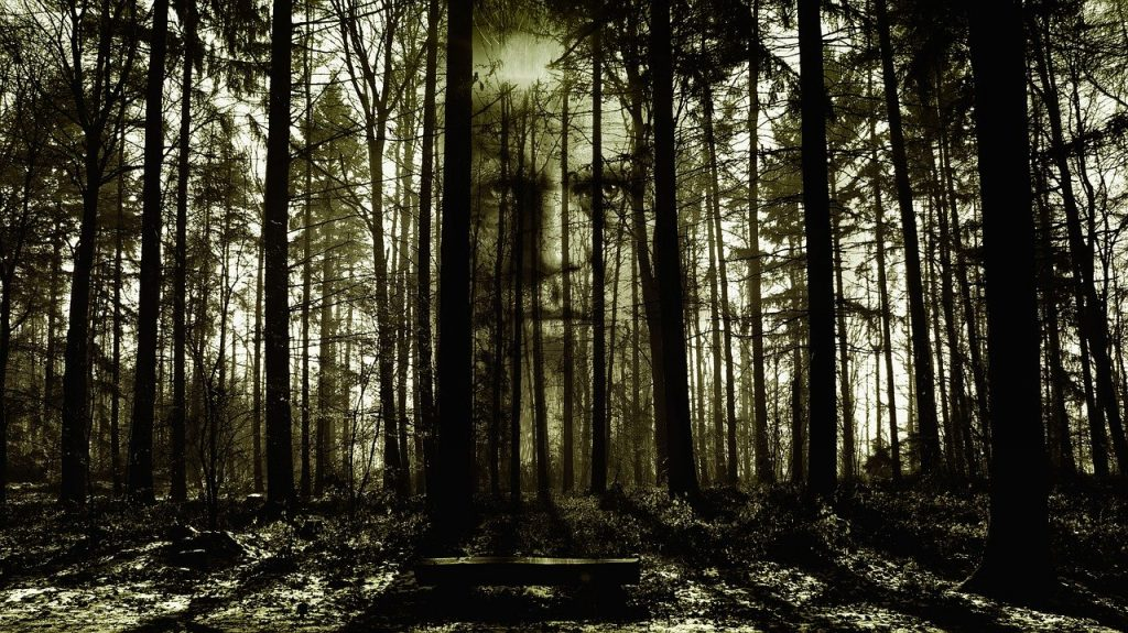 horreur, face, forest
